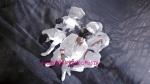 U-KISS(유키스) JAPAN 2nd Single Forbidden Love M_V.mp4_000212679